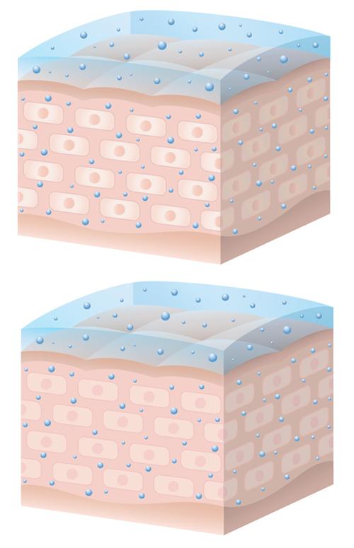 細胞の断面図イラスト