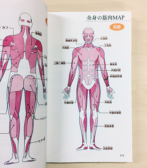 全身の筋肉を説明するための図