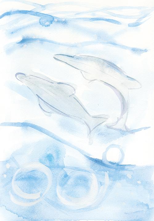 イルカ01