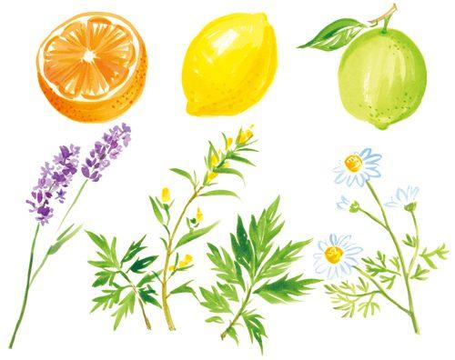 柑橘系とハーブ