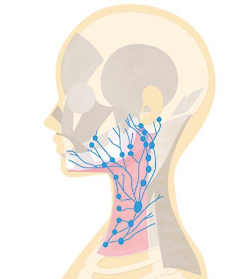 リンパ腺の流れを説明するイラスト