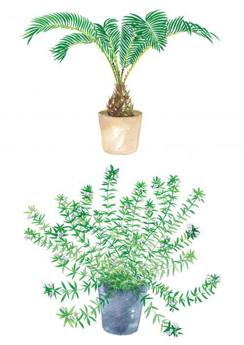 吉岡香織が描いた植物イラスト