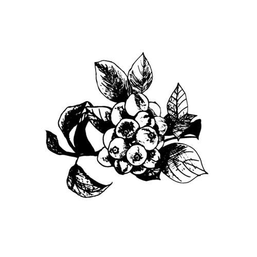 maricoが描いた植物のイラスト
