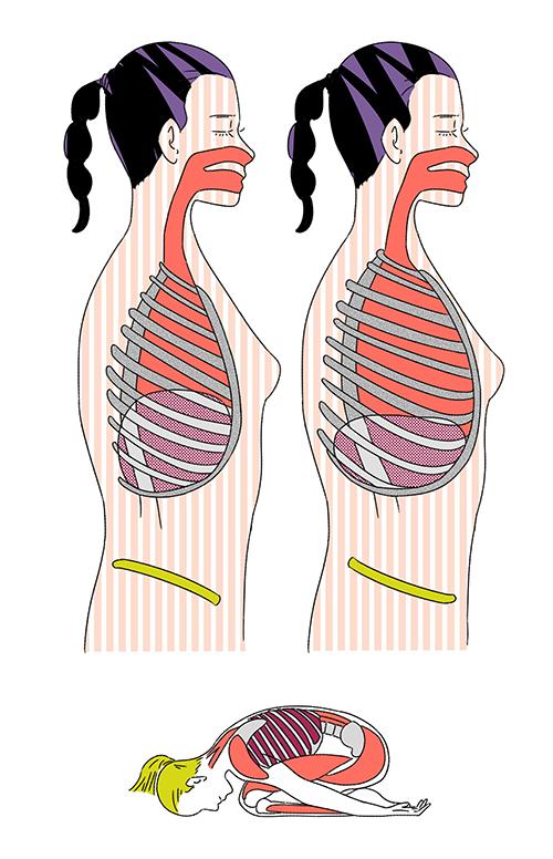 骨格と筋肉を説明するイラスト