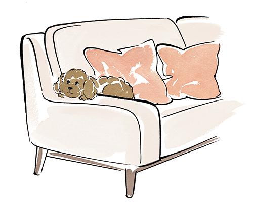 ソファにのっている犬