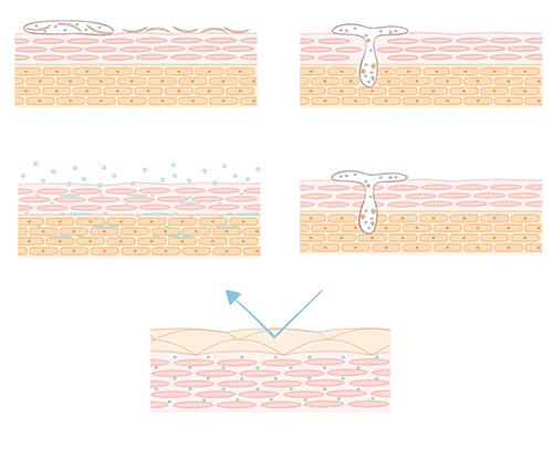 細胞の断面図