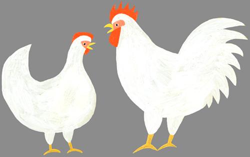 雄鳥と雌鳥のイラスト