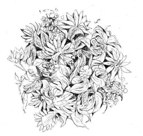 リアルなえんぴつタッチで描いたお花のイラスト