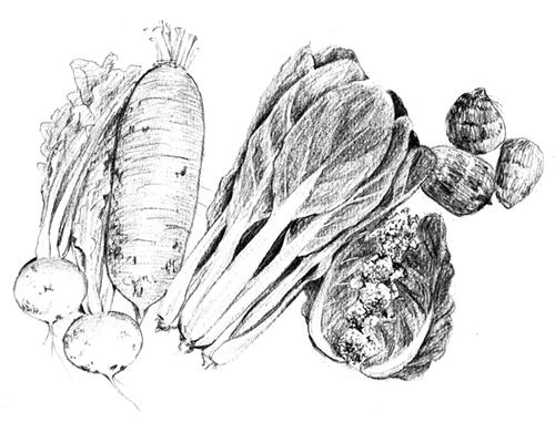 リアルなえんぴつタッチで描いた野菜のイラスト