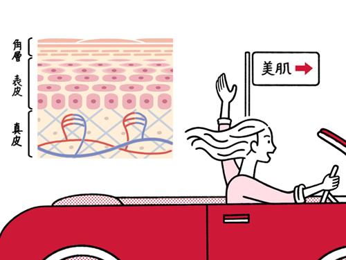 車を運転している女性と細胞イラスト